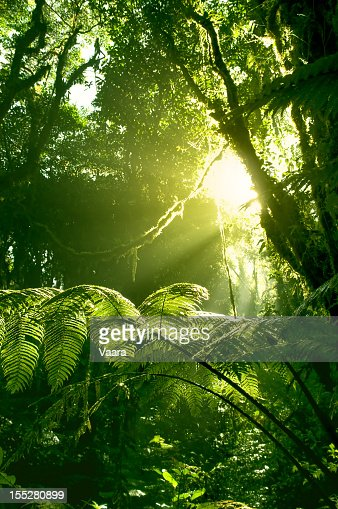 Morning sun in Costa Rican rainforest