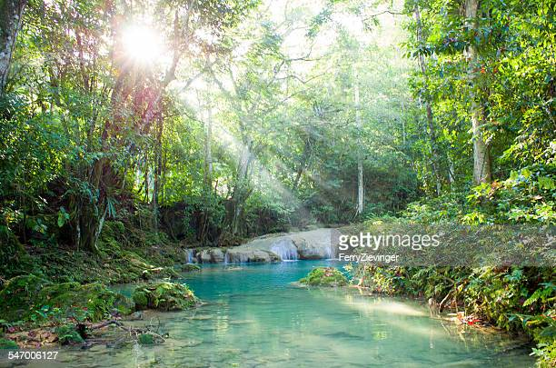 Jamaica, Morning sunbeam in rainforest, river in foreground