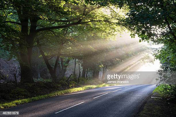 Morning sun rays falling on forest road