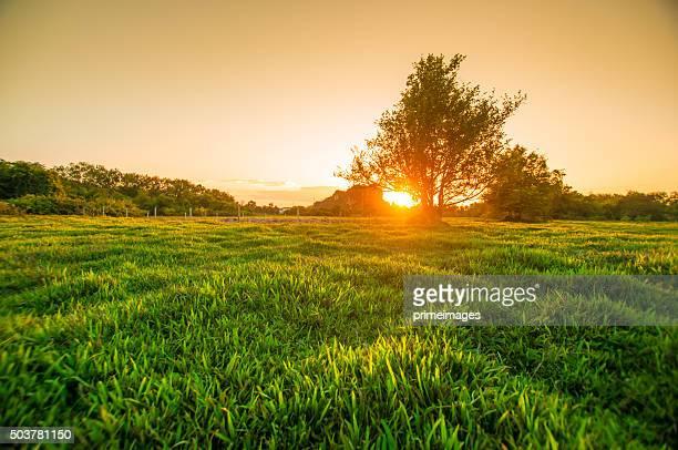 Morgen Sonne scheint durch die blühenden Baum