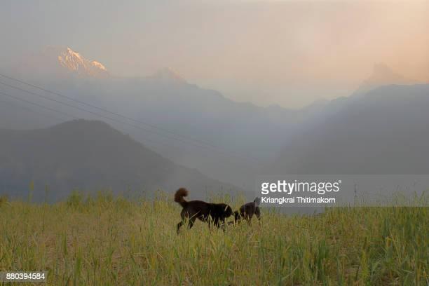 Morning sunrise at Ghandruk village during Ghorepani Poon Hill trek in Nepal.
