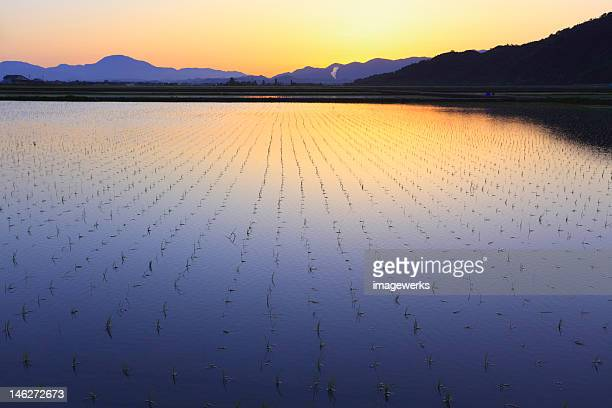 Morning view of agricultural field