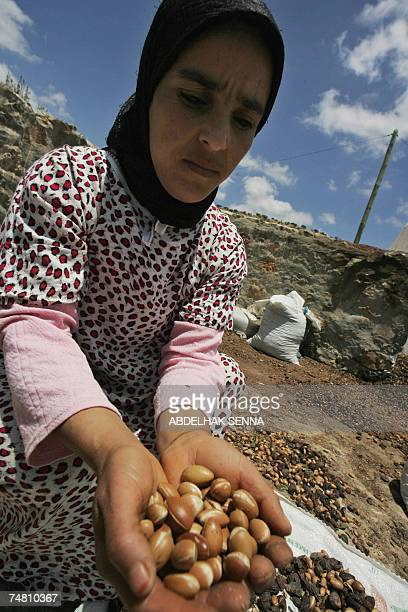Moroccan woman picks up Argan tree nuts 18 June 2007 in Smimmou near Essaouira to make Argan oil The Argan tree is unknown for many people since it...