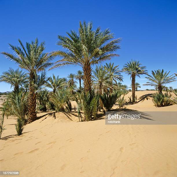 Palm Desert Dating Site Free Online Dating in Palm Desert CA
