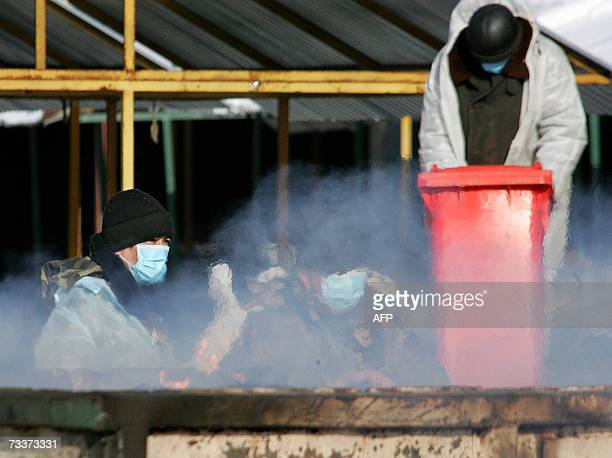 Veterinary surveillance workers wear protective suits and masks work as they burn infected birds at a poultry market in Moscow 20 February 2007...