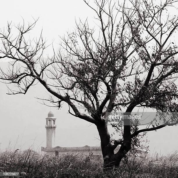 Moschee neben Baum, schwarz und weiß