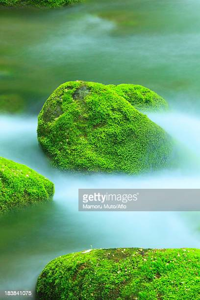 Moss and water stream