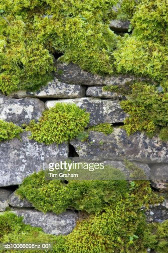 Moss Covered Dry Stone Wall, UK : Stock Photo