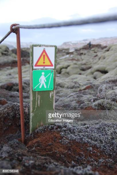 Moss covered lava field in winter Iceland