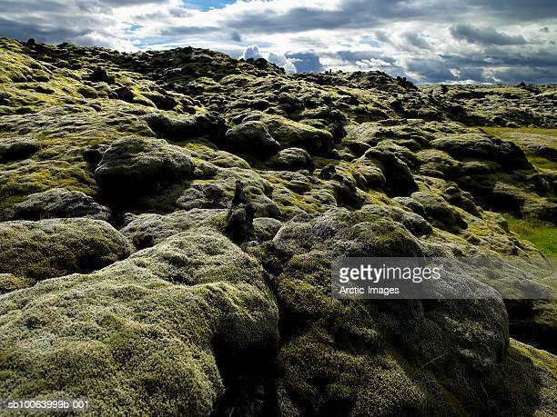 Moss covered mountains