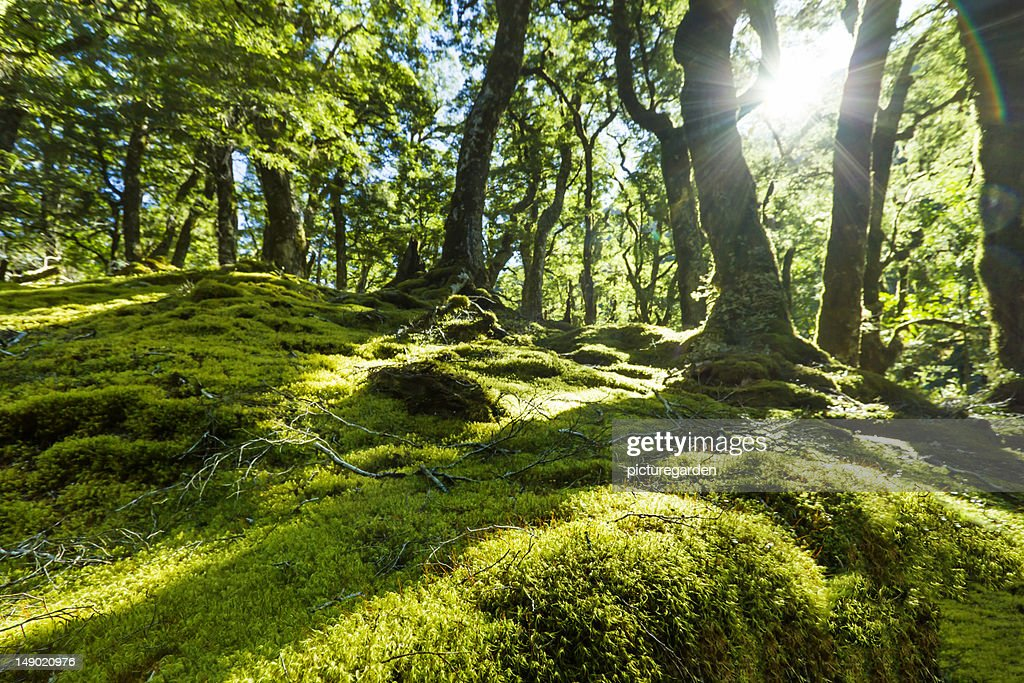 Moss Floor Rain Forest : Stock Photo