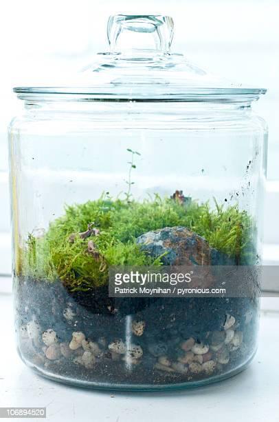 Moss Garden Terrarium Centerpiece