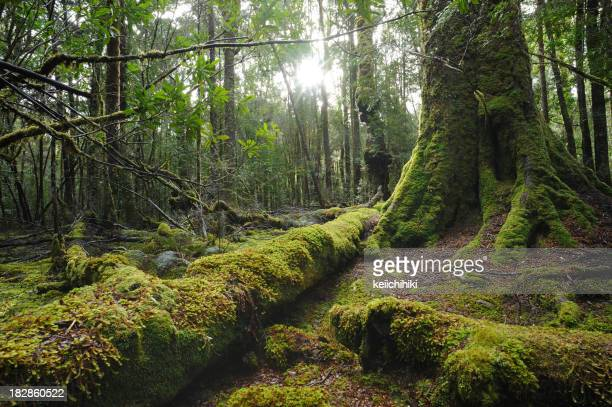 Moss growing on trees and fallen trunks in a forest