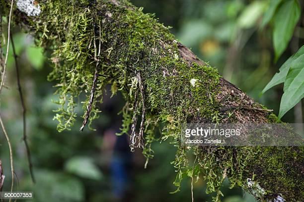 Moss hanging from a fallen tree
