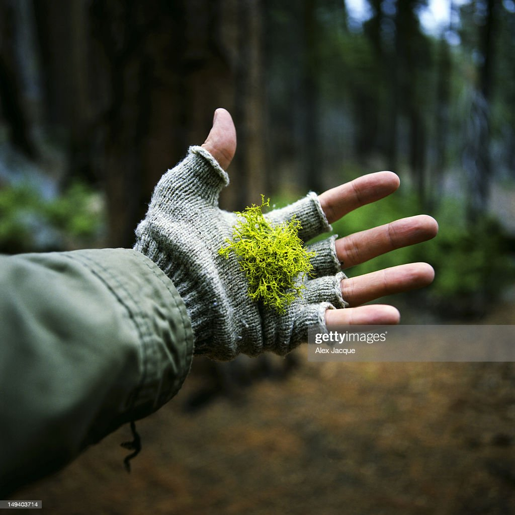 Moss in hand