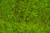 moss texture from nature plant in tropical