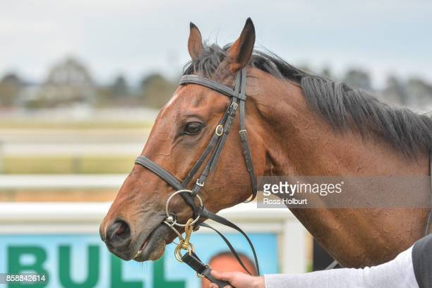 Moss 'n' Bolt after winning the Gippsland Grain Store Maiden Plate at Bairnsdale Racecourse on October 08 2017 in Bairnsdale Australia