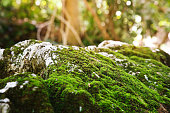 Moss nature background.