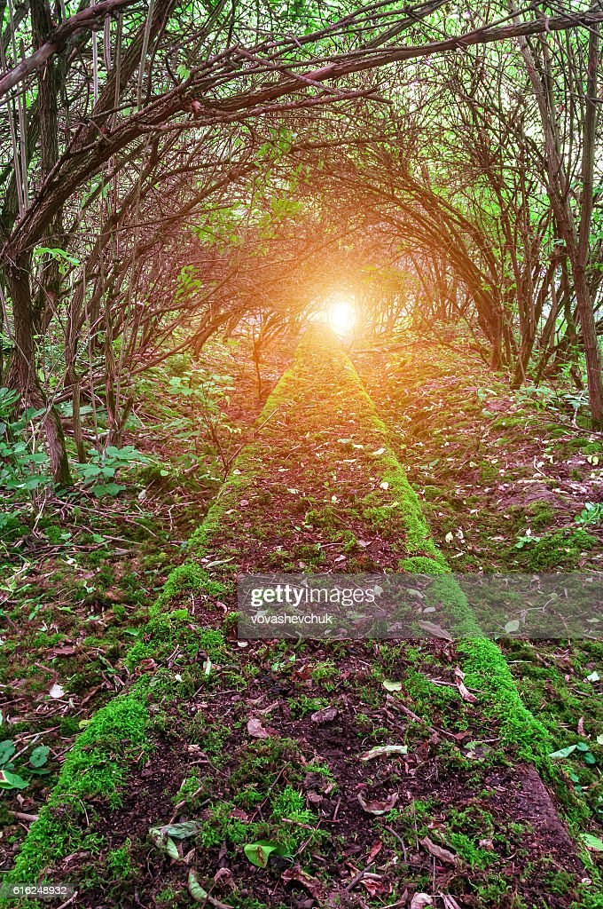 moss on path : Stock-Foto