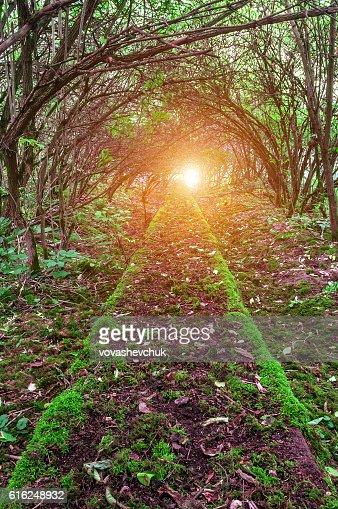 moss on path : Foto de stock