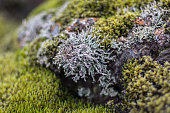 A close-up of a moss covered rock at Iceland's lava field.