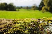 Moss on stone - UK
