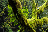 Moss on trees in rainforest