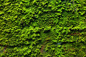 Moss on wall of bunker from world war 2 in Germany
