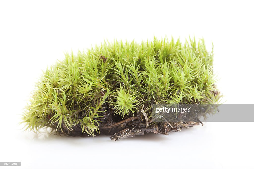 Moss : Stockfoto