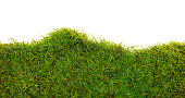 background of moss on white background
