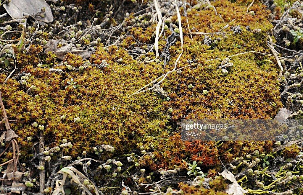 Moss : Stock Photo