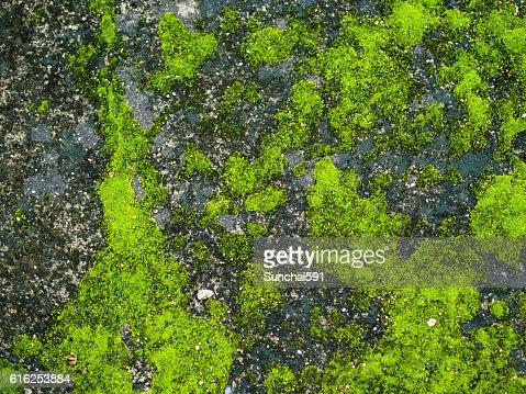 Moss  : Foto de stock