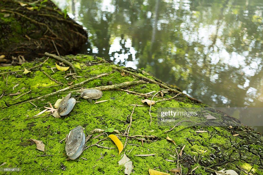 Moss textura de fundo : Foto de stock