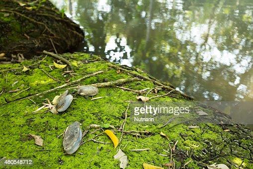 Moss textura de fondo : Foto de stock