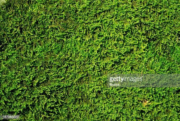 Moss Struktur