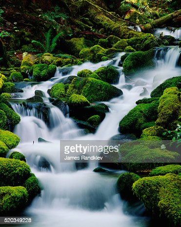 Moss-Covered Boulders at Sol Duc Falls