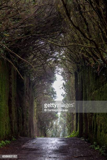 Moss-covered tunnel in Anaga