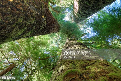 Moss-draped wooded forest