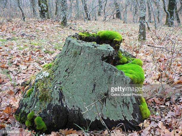 Mosses and lichens on dead wood