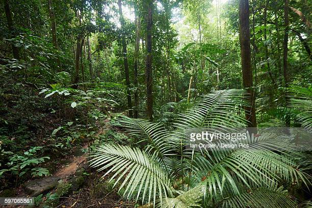 Mossman Gorge Daintree National Park, the oldest rainforest in the world