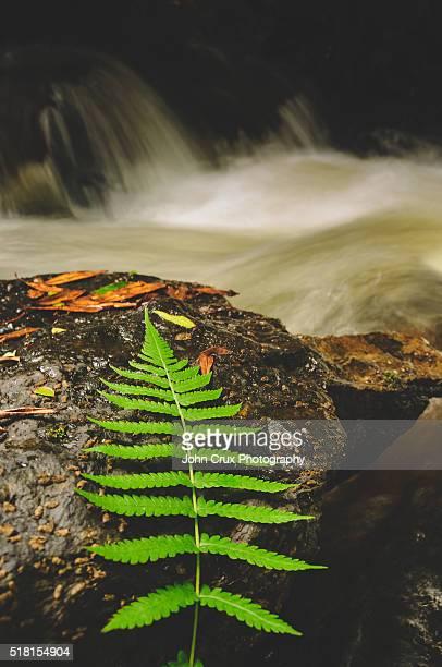 Mossman gorge national park nature