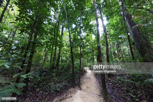 Mossman Gorge tropical landscape