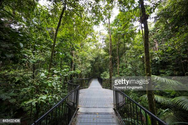 Mossman Gorge tropical landscape