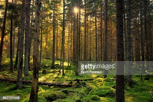 Mossy green forest : Stock Photo