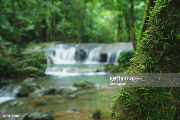 Mossy green tree and waterfall background
