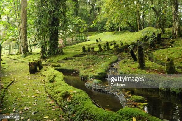 Mossy Paradise