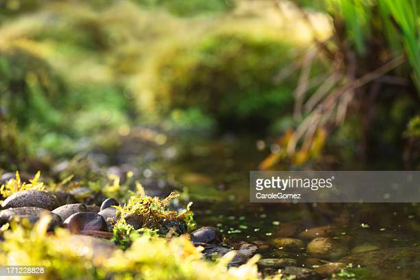 Mossy Pebbles and Pond