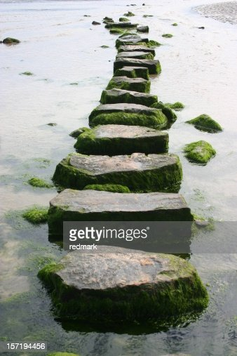 mossy stepping stones