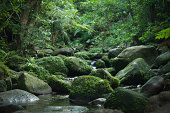 Mossy stream in tropical rainforest, Iriomote