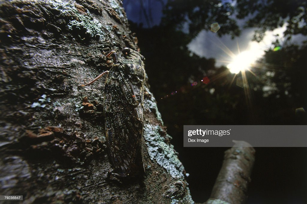 A moth camouflaged on a tree trunk, close up : Stock Photo